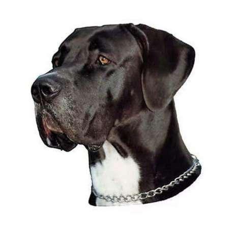 Autocollants Dogue Allemand noir et blanc - 7 cm - Lot de 4 de marque :