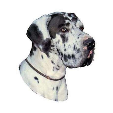 Autocollants Dogue Allemand Arlequin - 7 cm - Lot de 4 de marque :