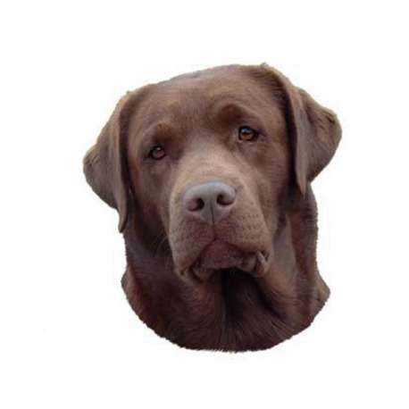 Autocollants Labrador marron - 7 cm - Lot de 4 de marque :