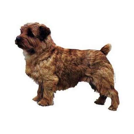 Autocollants Terrier de Norfolk - 7 cm - Lot de 4 de marque :