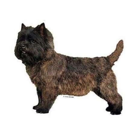 Autocollants Cairn Terrier - 7 cm - Lot de 4 de marque :