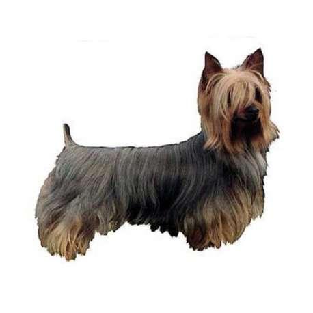 Autocollants Silky Terrier - 7 cm - Lot de 4 de marque :