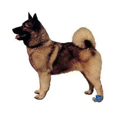 Autocollants Elkhound - 7 cm - Lot de 4 de marque :