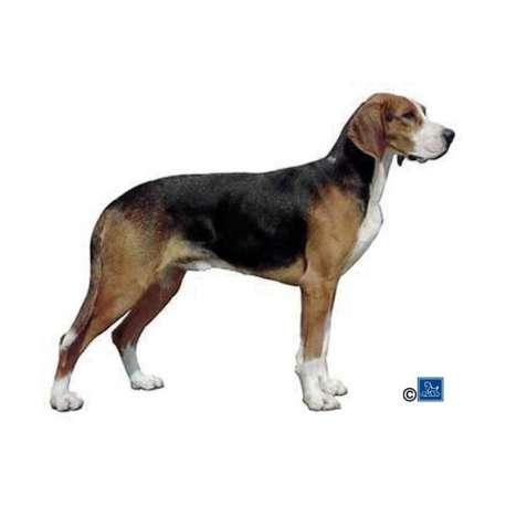 Autocollants Foxhound Américain - 7 cm - Lot de 4 de marque :