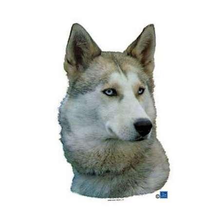 Autocollants Husky sibérien blanc et gris - 7 cm - Lot de 4 de marque :