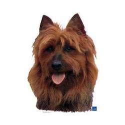 Autocollants Terrier australien - 7 cm - Lot de 4