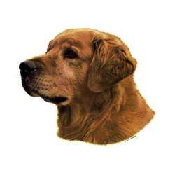 Autocollants Golden Retriever - 14 cm - Lot de 2