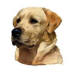Autocollants Labrador sable - 14 cm - Lot de 2
