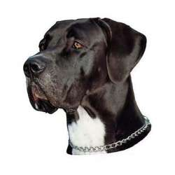 Autocollants Dogue Allemand noir et blanc - 14 cm - Lot de 2