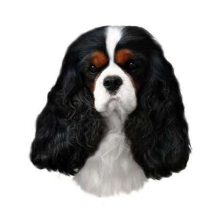 Autocollants Cavalier King Charles Tricolore - 14 cm - Lot de 2 de marque :