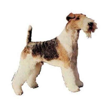 Autocollants Fox Terrier - 14 cm - Lot de 2 de marque :