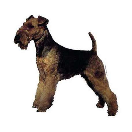 Autocollants Welsh Terrier - 14 cm - Lot de 2 de marque :