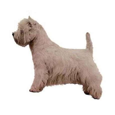 Autocollants West Highland White Terrier - 14 cm - Lot de 2 de marque :