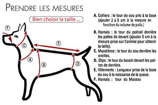 Prendre les mesures pour choisir la bonne taille pour un chien